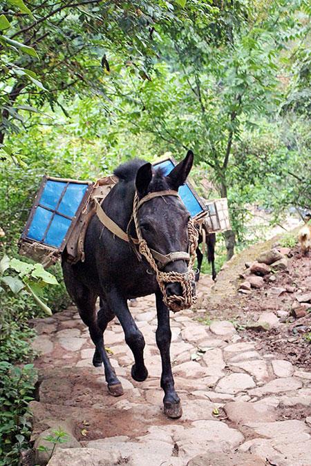 Louez les services d'une mule à Nuodeng en Chine