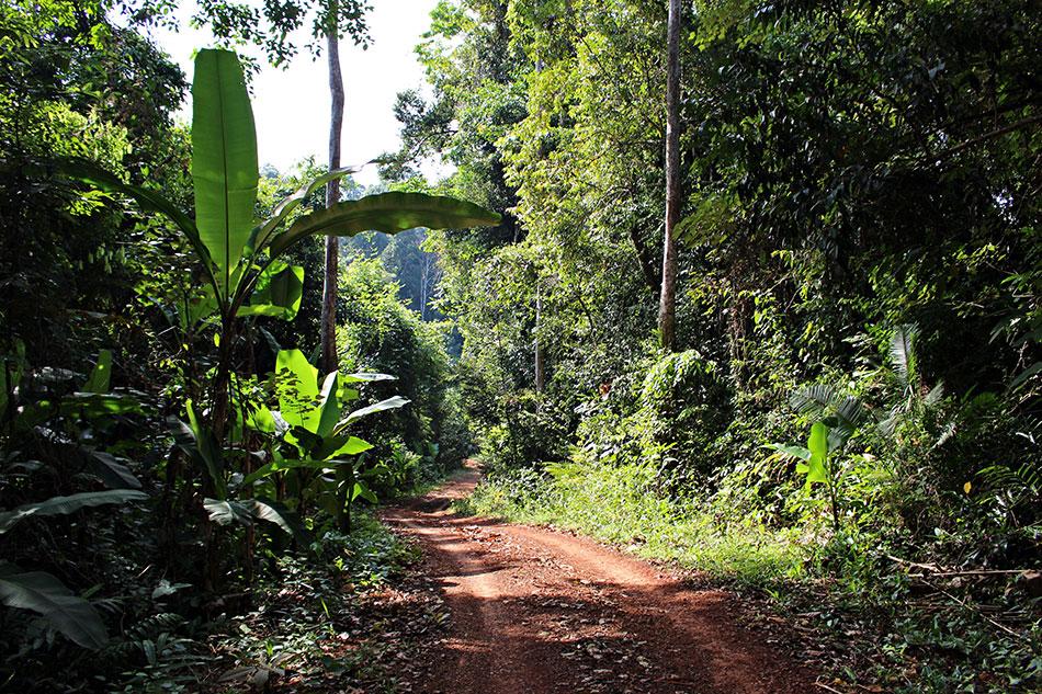 Pour explorer Koh Kood, n'ayez pas peur de prendre les petits chemins de terre.