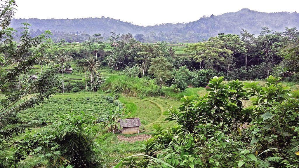 Rizières à Sidemen (Bali, Indonésie)